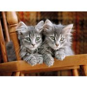 Gray Kittens on the chair