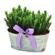 Scented Lavender Trough Gift